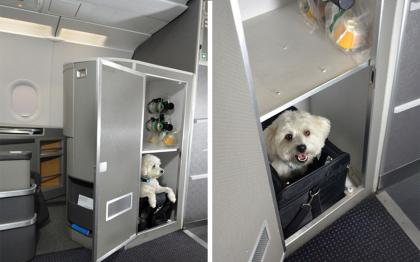 First Class Tickets for Pets